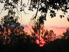 Setting Sun (Sunset West) Tags: trees sunset sky orange sun art nature colors beautiful leaves silhouette clouds forest canon outdoors evening march spring glow natural dusk peaceful powershot glowing settingsun eveningview naturescene eveningsunset noprocessing outdoorphotography sooc elph300hs