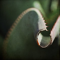 Cactus (Beatrycze.) Tags: cactus plant macro green sharp thorns asquaresuperstarstemple