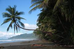 Costa Rica (Emma Sundelin) Tags: ocean sea costarica corcovado palmtree centralamerica rainforst regnskog centralamerika
