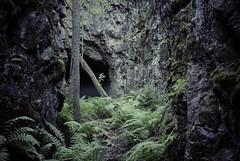 (Sameli) Tags: world urban 3 nature fog suomi finland underground 1 helsinki war military exploring wwi entrance tunnel storage bunker opening cave shelter exploration 1915 base ue urbex i3