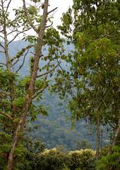 Uwinka in Nyungwe forest, Rwanda (Eric Lafforgue) Tags: africa nature forest landscape outdoors rwanda afrika paysage foret commonwealth afrique eastafrica centralafrica 2547 kinyarwanda ruanda afriquecentrale רואנדה nyungwenationalpark 卢旺达 르완다 盧安達 republicofrwanda руанда رواندا ruandesa