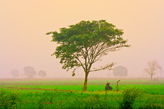 Untitled (Rambonp: Right Eye Operated,Left takes few more da) Tags: trees mist fog canon landscape day crop agriculture punjab canoneos1000d