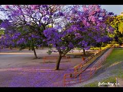 Um Parco Florido (Gutemberg Ostemberg) Tags: flores flower tree fleur portoalegre ip rs rvore riograndedosul parco gutemberg moinhosdevento gutembergostemberg moinhosparquemoinhosdevento