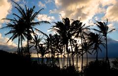Honolua Palms (EricOPhotos) Tags: trees sunset hawaii paradise fuji maui palm fujifilm x10 honolua