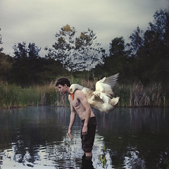 the pilot (brookeshaden) Tags: trees bird nature animal duck foggy