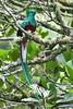 RESQUE 0011 (bryanjsmith62) Tags: birds quetzals trogons