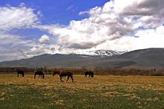 DSC01103 (jorgeaq) Tags: horses landscape caballos paisaje cerdanya cerdaa