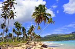 Un trocito de paraiso. (Victoria.....a secas.) Tags: beach playa palmeras explore palmtrees repúblicadominicana samaná