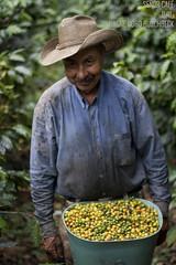 Seor cafe (Kayoya) Tags: caf venezuela coffe estadoportuguesa chabasquen