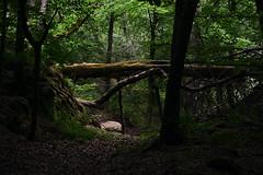 Into The Woods (Vers. 2) (ericgrhs) Tags: trees forest woods hessen path bume pfad waldweg mittelhessen