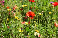 Flowers. (*Valentina.) Tags: flowers primavera canon garden eos spring details may dettagli fiori maggio giardino 550d