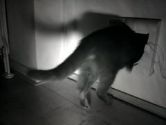 20160504-015659-o-1 (Catflap central) Tags: camera pet cats cat pi raspberry meow catdoor catflap kattenluik katzenklappe catflapj2nnl