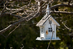 Goin to the chaple... (paulstewart991) Tags: bird spring collingwood birdhouse canadian countrylife canon70d