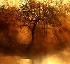 Tree in the rising mist (Z) Tags: orange mist france tree nature sunrise island rising pond natur normandie normandy arbre baum brouillard etang