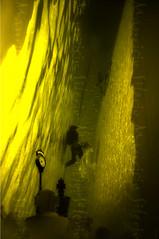 el tiempo acaba (Mauricio Silerio) Tags: kite clock water pool birds photomanipulation photography agua underwater chess piscina fotografia acqua piscine ajedrez alberca papalote acuatica ewamarine ap fotomanipulacion mauriciosilerio eauacqua