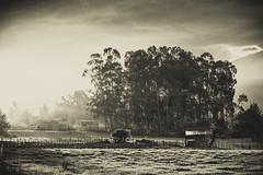 _DSC0315 (edu_420) Tags: viaje atardecer casa quito ecuador arboles valle paisaje virado