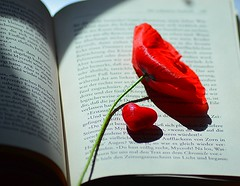 Why do we close our eyes when we pray, cry, kiss, dream? Because the most beautiful things in life are not seen but felt only by the heart. (natus.) Tags: flowers red book lightsandshadows heart poppy redgreen