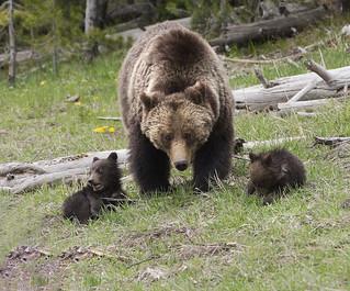 20160517_TwinLake_6215-1 Bears