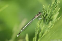 DN9A8811 (Josette Veltman) Tags: macro nature canon bug natuur bugs photowalk lente zwolle landschap insecten ivn westerveldsebos photowalkzwolle