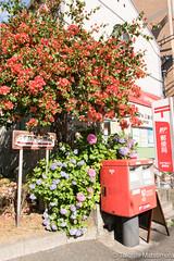 Flowery post office (takashi_matsumura) Tags: flower flora post office sendagi bunkyoku tokyo japan sigma 1750mm f28 ex dc hsm nikon d5300