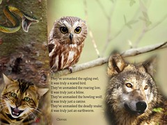 Unmasked Nature (Clouvux) Tags: tree animal forest cat photoshop wolf poetry poem snake adobe owl tale treebranch unmasked clovux