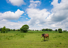 Dobbinscape (Mister Oy) Tags: horse rural walking landscape outdoors bluesky thirds davegreen ruralengland billinge oyphotos fuji18mmf2 18mmf2 fujixe2 oyphotos
