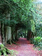 Follow the path (jimsawthat) Tags: uk rural forest scotland unitedkingdom walkingpath sconepalace