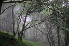 Midsummer Morning (Cal Killikelly) Tags: park wood trees summer mountain green nature june misty wales clouds landscape moss midsummer wildlife national mystical serene welsh ferns snowdonia magical midwales pennal machynlleth ancientforests gogarthhallfarm