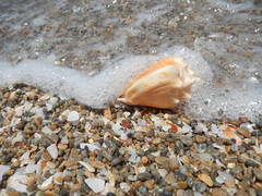 Brought by the wave (YamTikhoni) Tags: beach childhood telaviv mediterranean child seashell seashore mediterraneansea telavivyafo