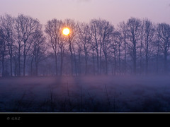 On a sunny misty morning (Greet N.) Tags: morning sun mist forest sunrise march spring drente