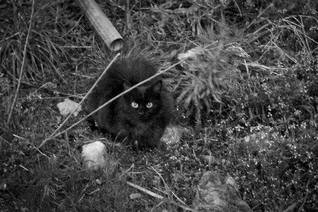 Today's Cat@2012-04-01