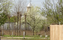[spring] bloom (Andrei'f) Tags: street flower tree church fence garden spring europe goose lane romania bloom babiciu