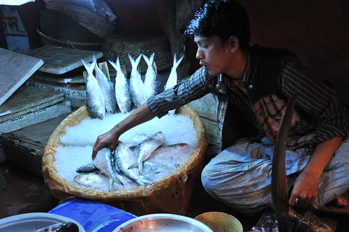 Fish Market in Mymensingh, Bangladesh. Photo by Finn Thilsted, 2012.