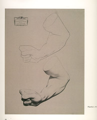 19_flexed_forearm_of_a_man (Martin E. O'Connor) Tags: life sculpture print greek drawing traditional plaster size cast realist classical plates sight barge atelier palte bargue sightsize