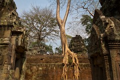 Towers and trees (Geoff Main) Tags: temple ancient cambodia angkor taprohm canonefs1022mmf3545usm canon7d khmercivilisation