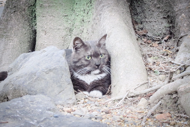 Today's Cat@2012-06-06