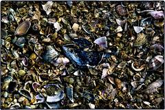 ... SDIM2714 (*melkor*) Tags: stilllife macro art beach nature colors seashells dark geotagged dead seaside colours experiment ground minimal soil seashell casual conceptual melkor casuality trashbit aseashellscarpet anabstractnatureproject