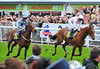 Wayne Rooney's horse Tomway (in pink, which finished second last) Ladies Day at Chester Racecourse Cheshire, England