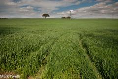 Tracks and Tree (Mark Twells) Tags: england tree unitedkingdom annscroft thattree
