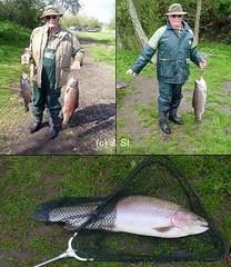 The winner is: Daddy (Yogi 58) Tags: fishing bigfish angeln troutfishing yogi58 forellenangeln jörgsteiof riesenforelle denmark2012 dänemark2012