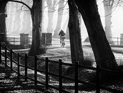 Morning Ride (Collin Key) Tags: bw nature alley schleswigholstein bycicle northgermany imagepoetry herzogtumlauenburg gudow alwaysexc collinkey mistandlight