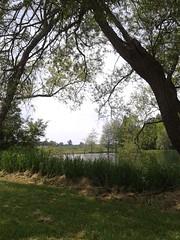 donkey sanctuary pond (scosborne) Tags: pond willow salix flickrandroidapp:filter=none