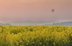 Fly Away (Vemsteroo) Tags: light sunset mist hot silhouette canon landscape golden evening fly haze dusk air balloon craft 7d fields dreamy rise tranquil magichour rapeseed momentintime 24105mm