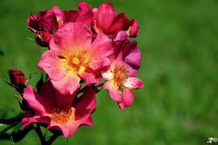 Primavera (Riccardo Brig Casarico) Tags: flower wow brig riki brigrc