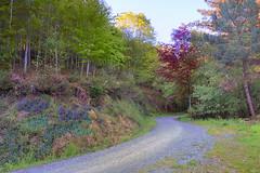 ArantxilleBidea (roli_photos) Tags: naturaleza verde azul arbol rojo nikon camino colores bizkaia galdakao bidea d600 euskalerria arantxille
