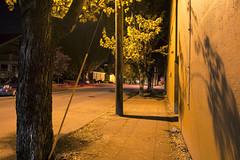 Second Street (Curtis Gregory Perry) Tags: street longexposure light shadow tree yellow night oregon nikon branch pole sidewalk mcminnville d800e