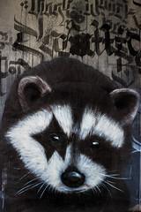 Ein Waschbr kommt selten allein! (S. Ruehlow) Tags: graffiti frankfurt graffito brcke westhafen waschbr friedensbrcke gutleut gutleutviertel westhafengebiet