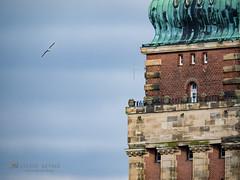 Gooooood morning Kiel! (__db_) Tags: tiere cityhall seagull gull himmel aves townhall vgel rathaus mwe mwen kiel tier vogel morgens laridae charadriiformes regenpfeiferartige
