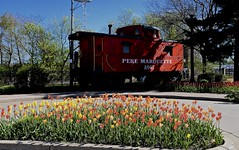 Tulips - Pere Marquette Caboose - Holland Michigan (Meridith112) Tags: railroad red orange holland yellow mi train spring nikon midwest tulips michigan may peremarquette caboose trainstation tulip tuliptime yellowflowers 1941 tulipa redtulips csx 2016 yellowtulips ottawacounty redcaboose a967 nikon2485 stlouiscarcompany peremarquetterailroad nikond610 peremarquettecaboose padnostransportationcenter hollandmichiganamtrak waverlyyardenginehouse