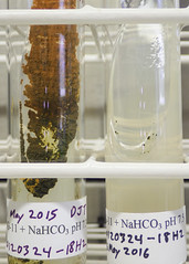 ORNG0366 (David J. Thomas) Tags: culture cave algae microbiology slant agar cyanobacteria phycology lyoncollege bg11 photobiont phycobiont